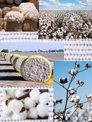 cotton group