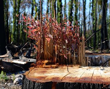 Bushfire Healing Initiative