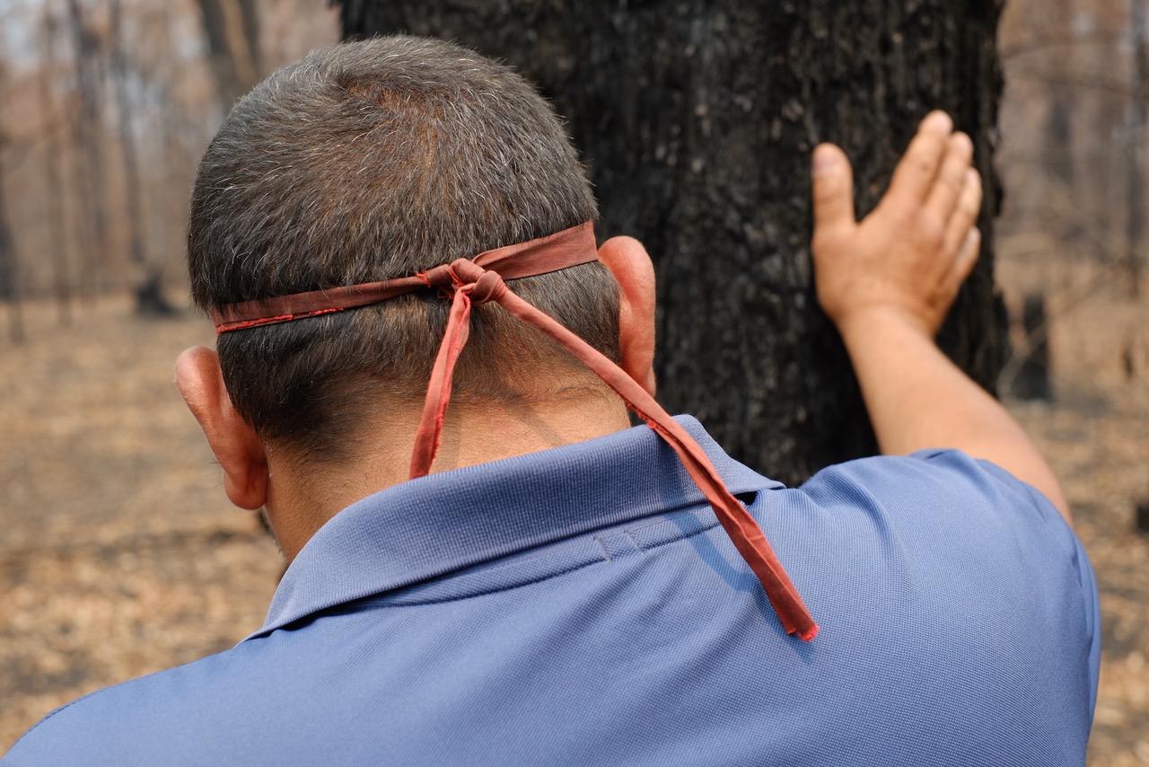 Bushfire healing 5