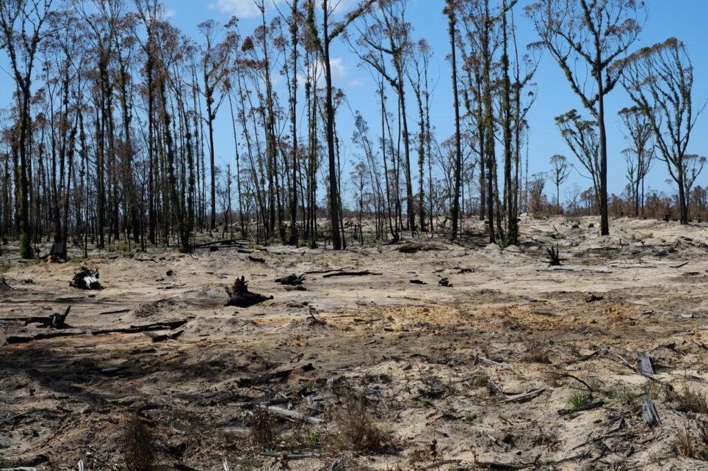 Bushfire healing 8