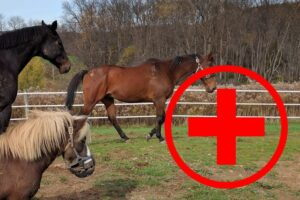 Horses Walking in Paddock Together with Red First Aid Cross Emblem