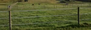 Electric fence with horses in background