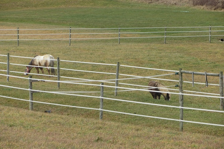 horses contained by electric fence