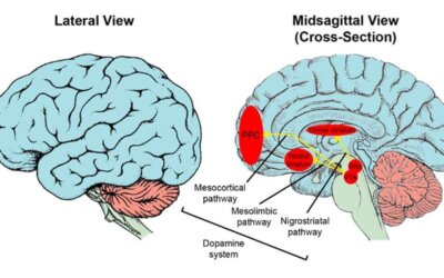 The neuroscience of psychometrics. A review of the brain's aptitude for work.