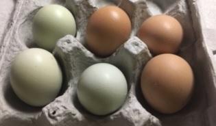 free range eggs in a carton