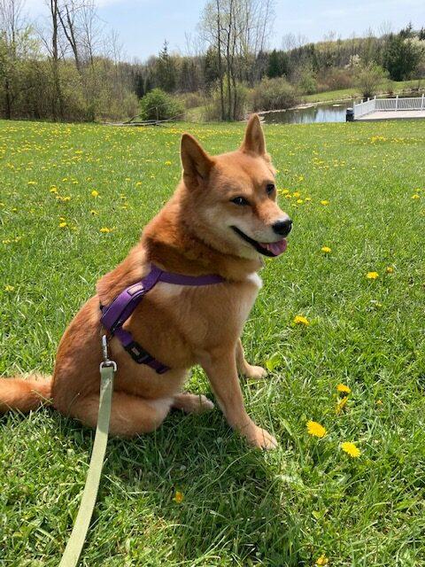 Taking a walk near the dog park in Streetsboro