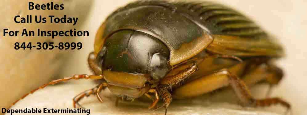Beetle Extermination