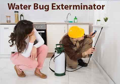 Water Bug Exterminator