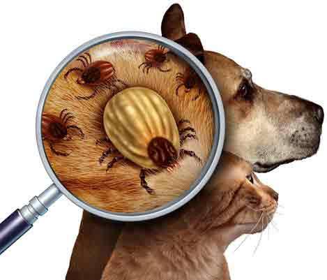 Visual Flea Inspection