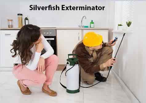 Silverfish Exterminator