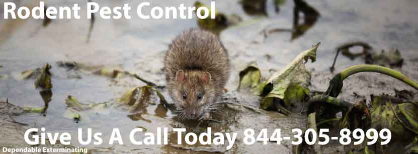 Mouse Exterminator