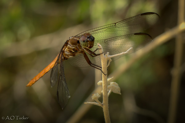 Dragonfly Hanging On