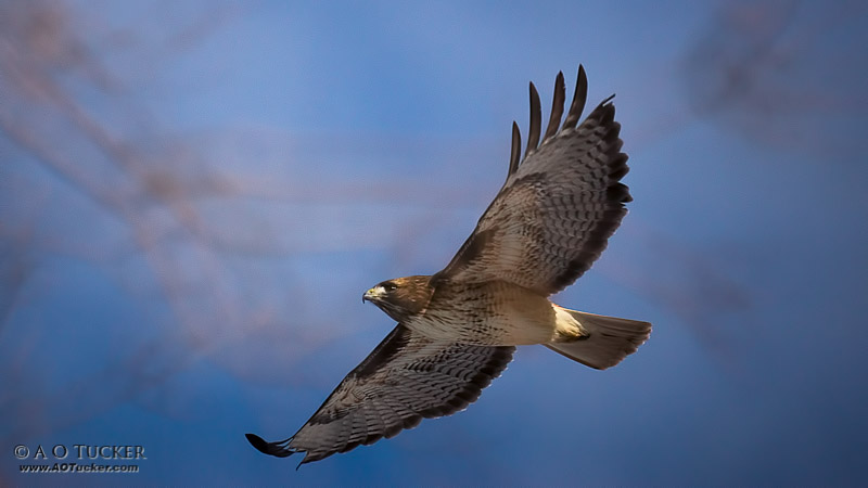 Soaring Over Red Rock State Park