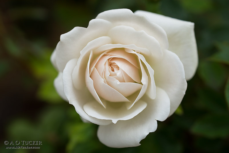 Purity - 4th Annual Floral And Botanical Exhibit - Arts HQ post
