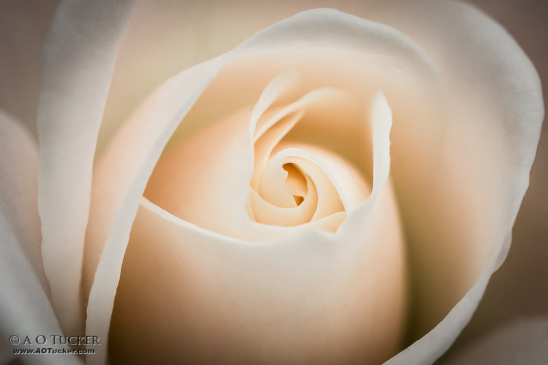 Wandering Curves - 4th Annual Floral And Botanical Exhibit - Arts HQ post