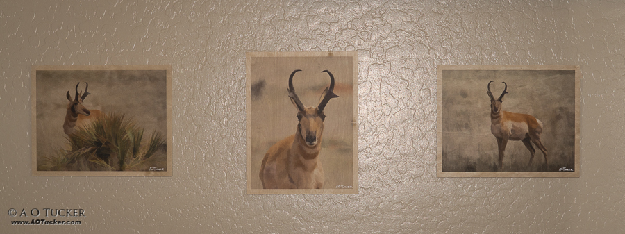Pronghorn Collection