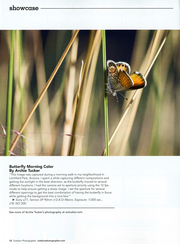 Outdoor Photographer - Butterfly Morning Color