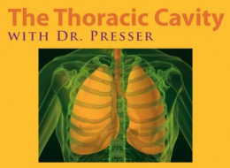 the thoracic cavity with dr presser