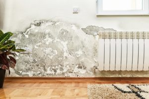 Mold removal and remediation by big Red's Guaranteed Clean in Omaha, NE