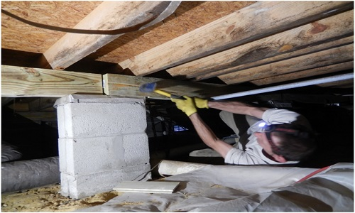 Termite Damage Repair Division