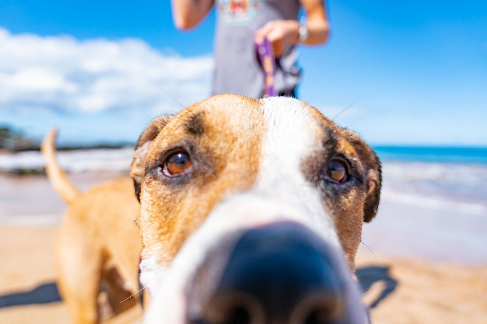Closeup of a dogs face on the beach