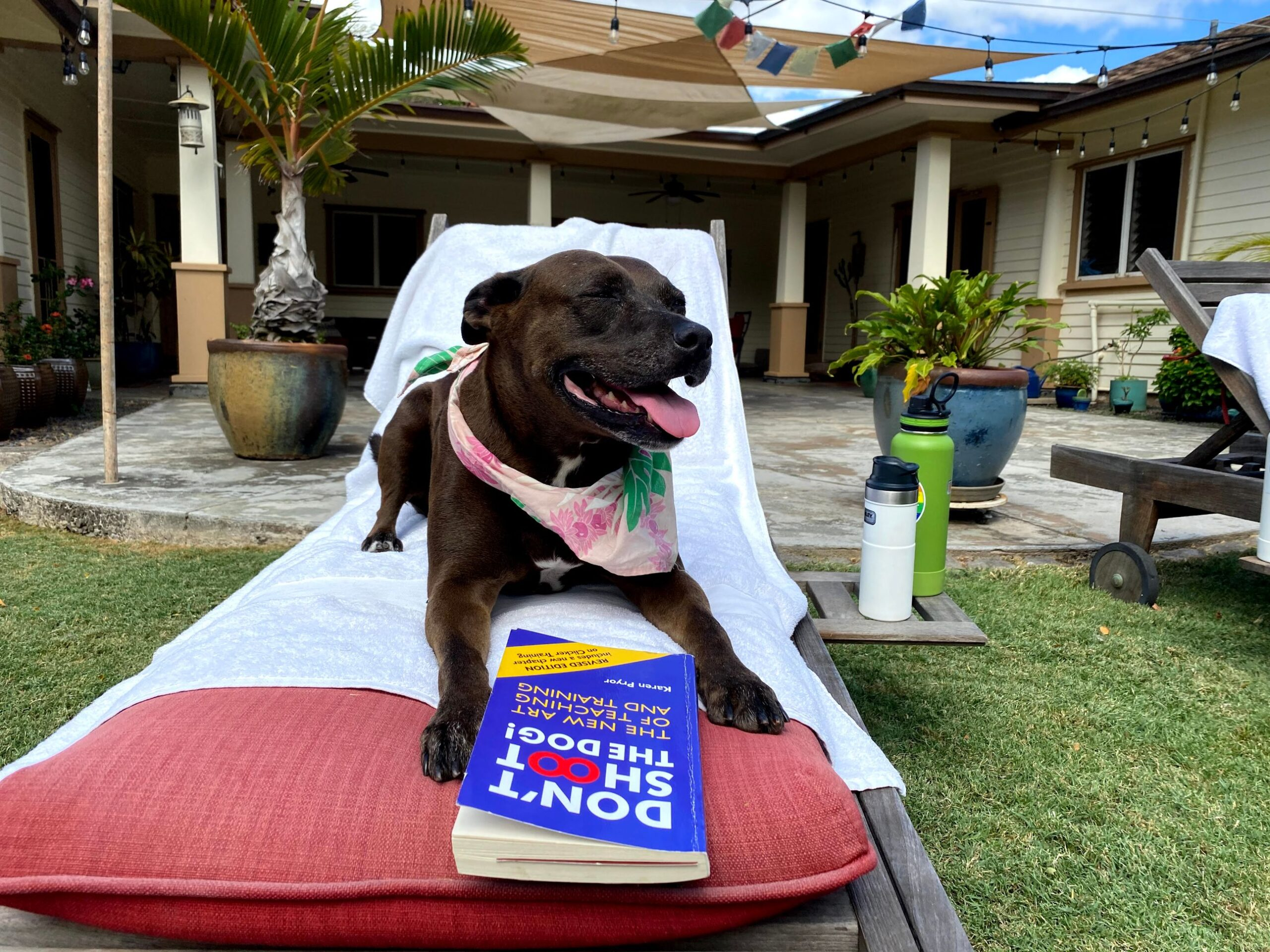 Dog sitting on an out door chare reading a book