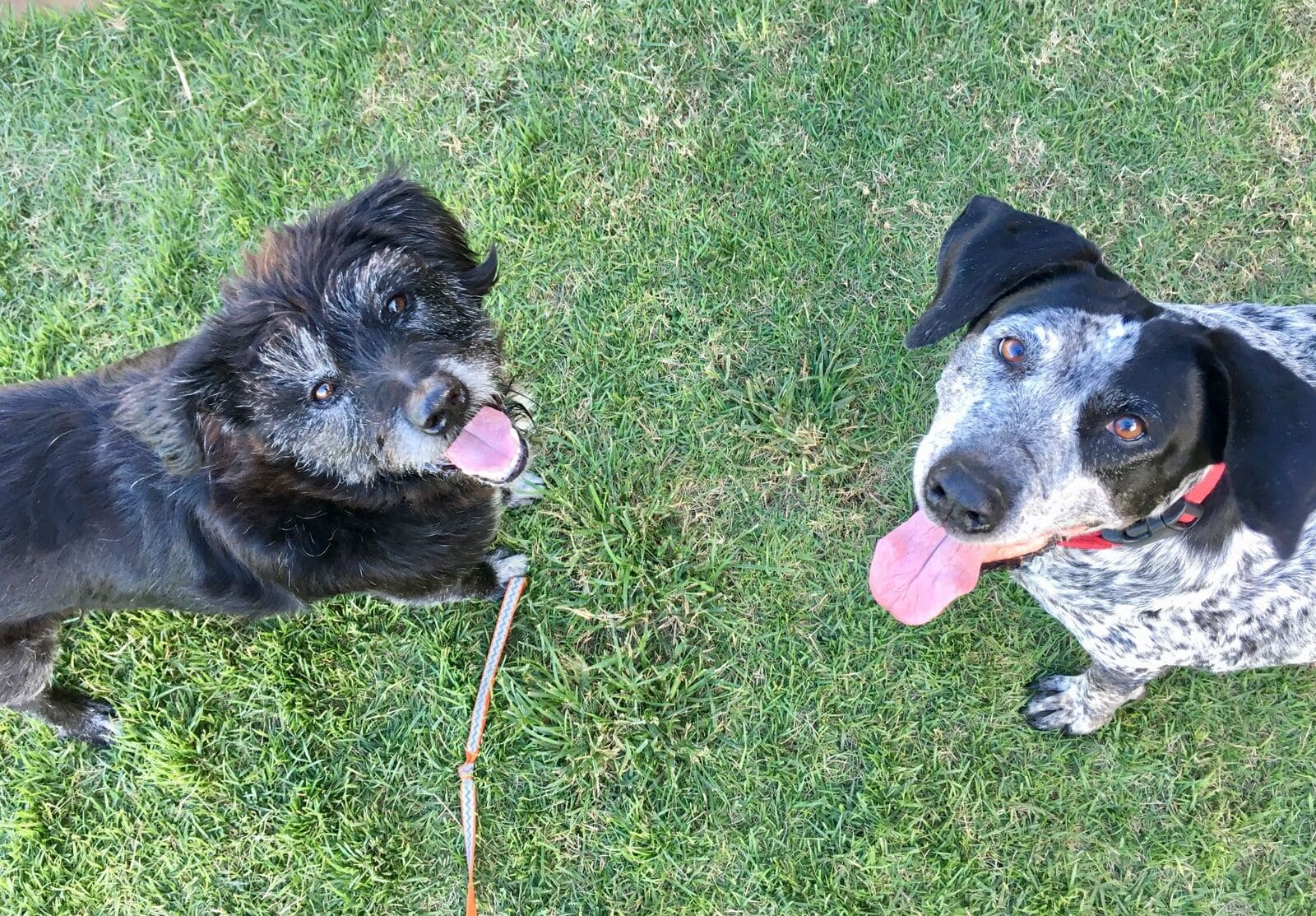 2 dogs smiling looking up