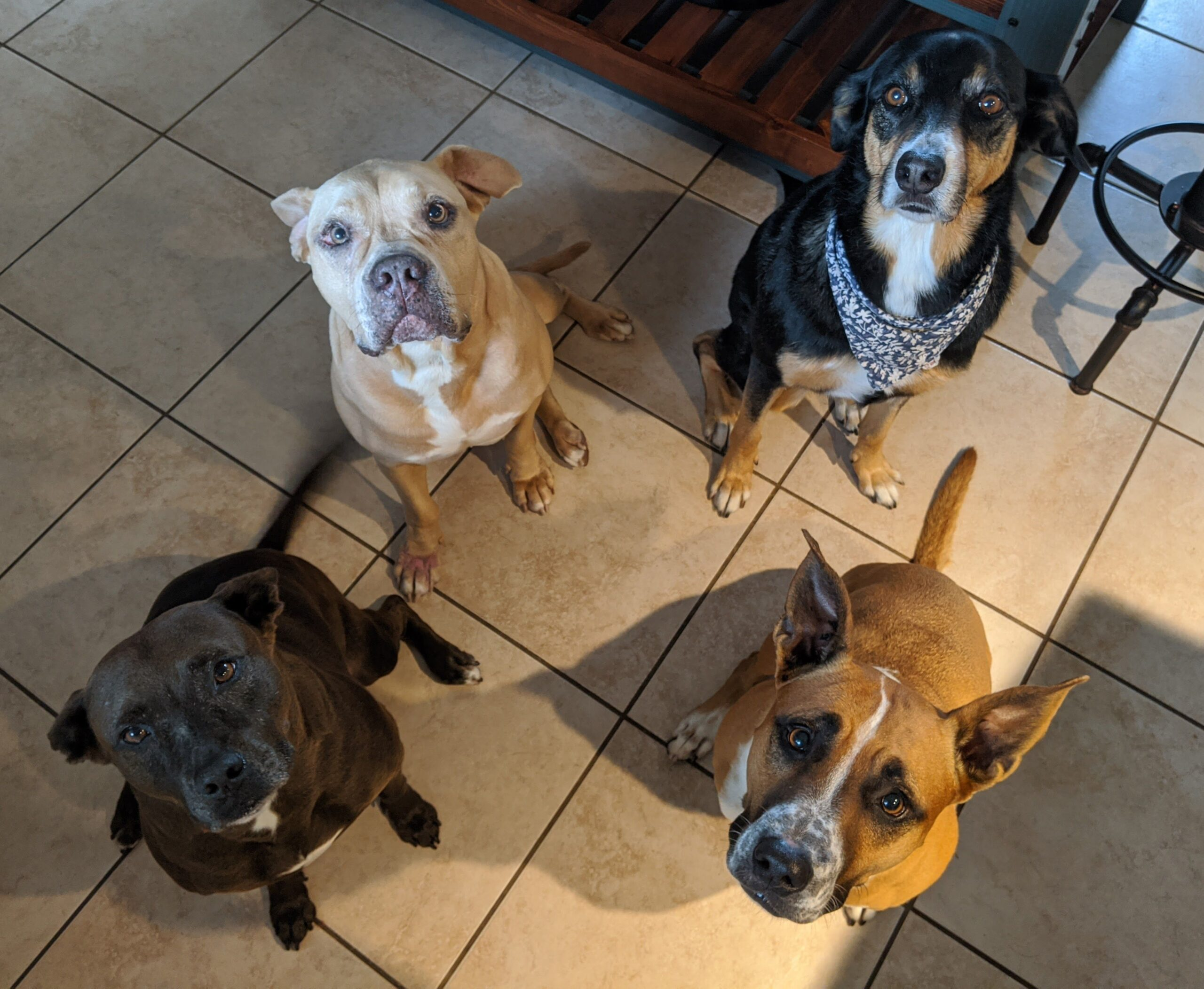 4 dogs looking up at the camera