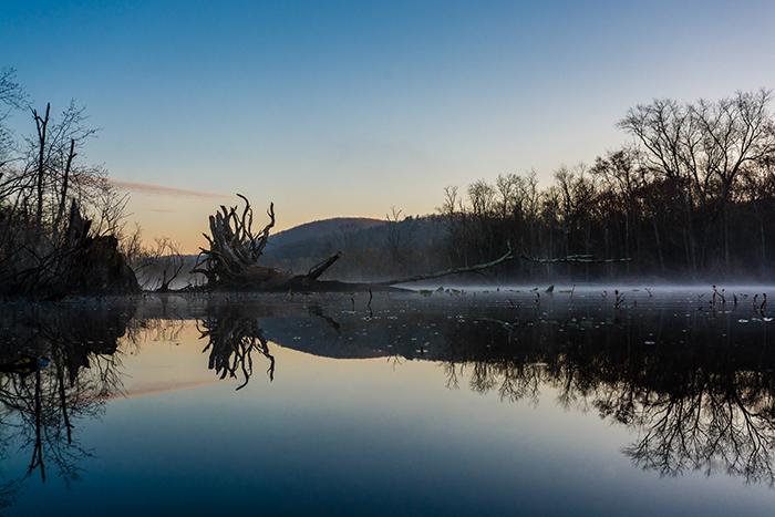 great-swamp-fog-goodhart