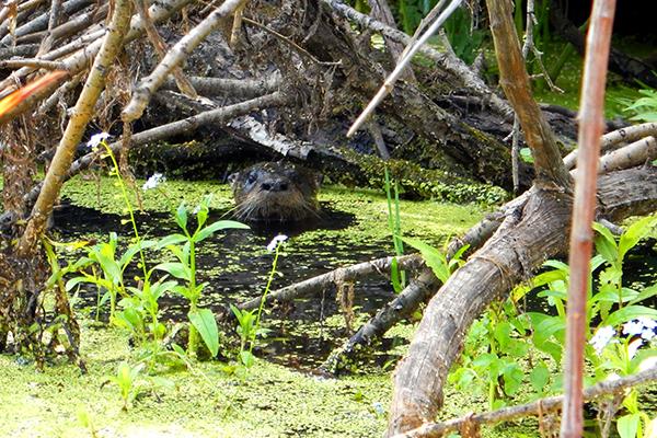 great-swamp-kelly-goodhart
