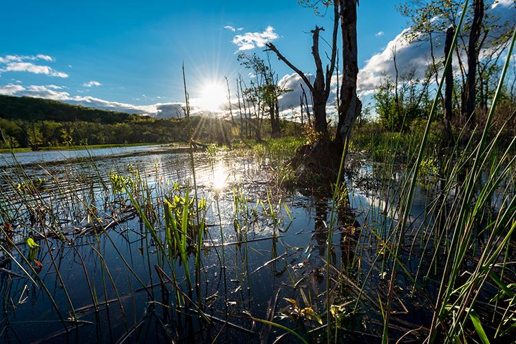 great-swamp-reeds-goodhart