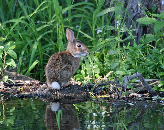 rabbit-don-turner