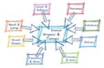 Blog post infographic, organ donation