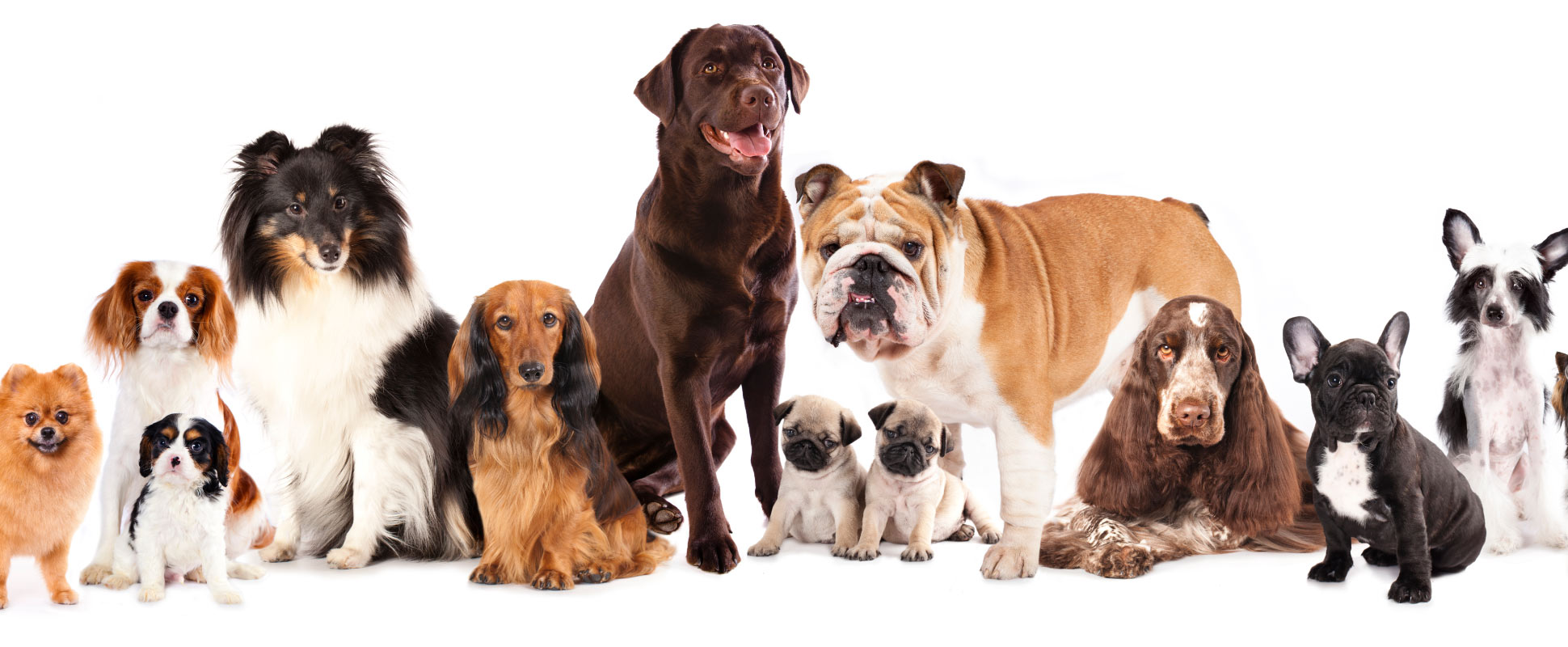 Furry Land Grooming - Las Vegas Dog Grooming
