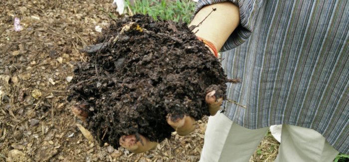 24-hr composters: There's no microbe in this universe that can colonize in 24 hrs   Q&A With Dr. Manoj