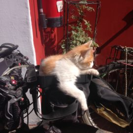 It's time to ride, right meow!