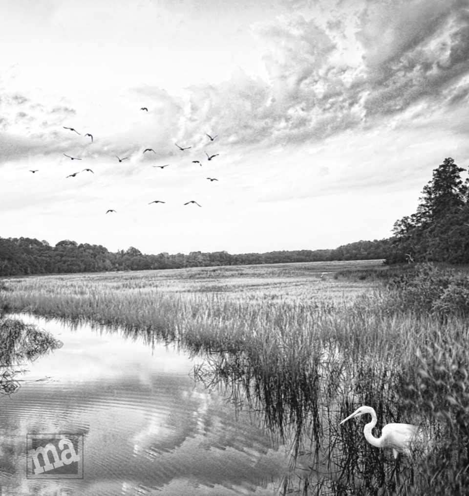 Life in the Low Country by Marge Agin
