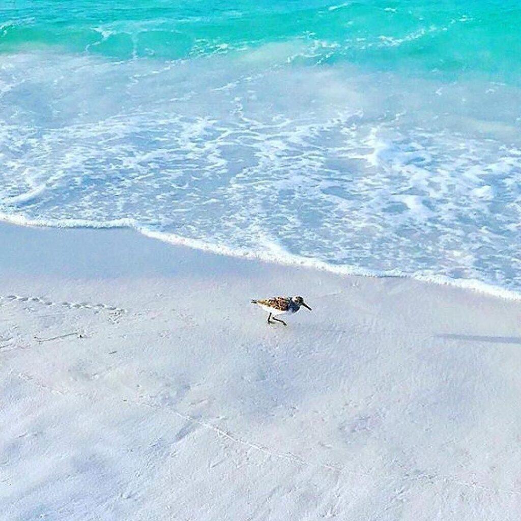 Boca Raton Beach and Bird