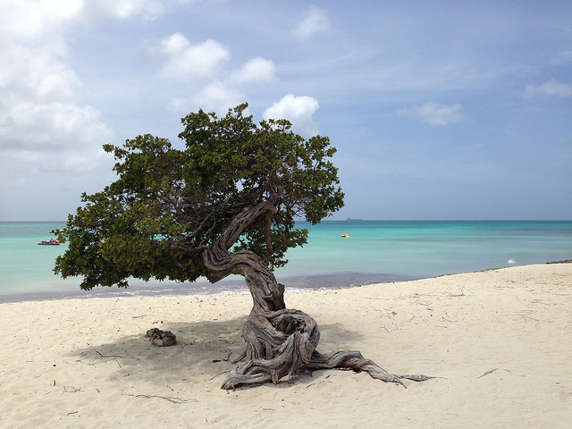 Choose Your Own Adventure: a Driving Map and Daytrip Guide to Aruba   Blog Prestige Vacations Aruba