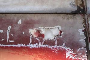 Buffalo Gulch • Wendy Kappy