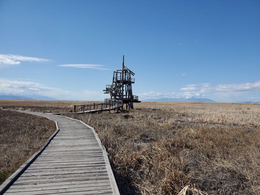 Observation Tower at GSL Shorelands Preserve
