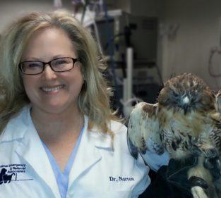 Dr. Jennifer Norton