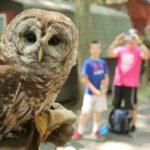 Wild Birds Education Event