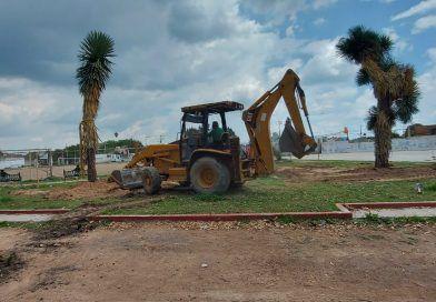 Por colector reubican 'palmas datileras' del Malecón del Río y Puente 'Agustín Rivera'