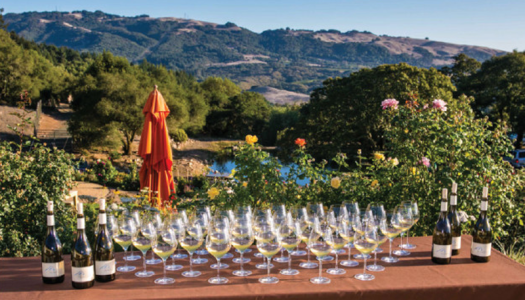 Vino Adventures: The Sonoma Shuffle (A Trip to Wine Country)