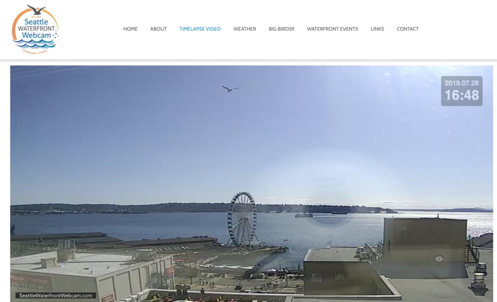 Seattle Waterfront Webcam Single Seagull Soaring Above Seattle
