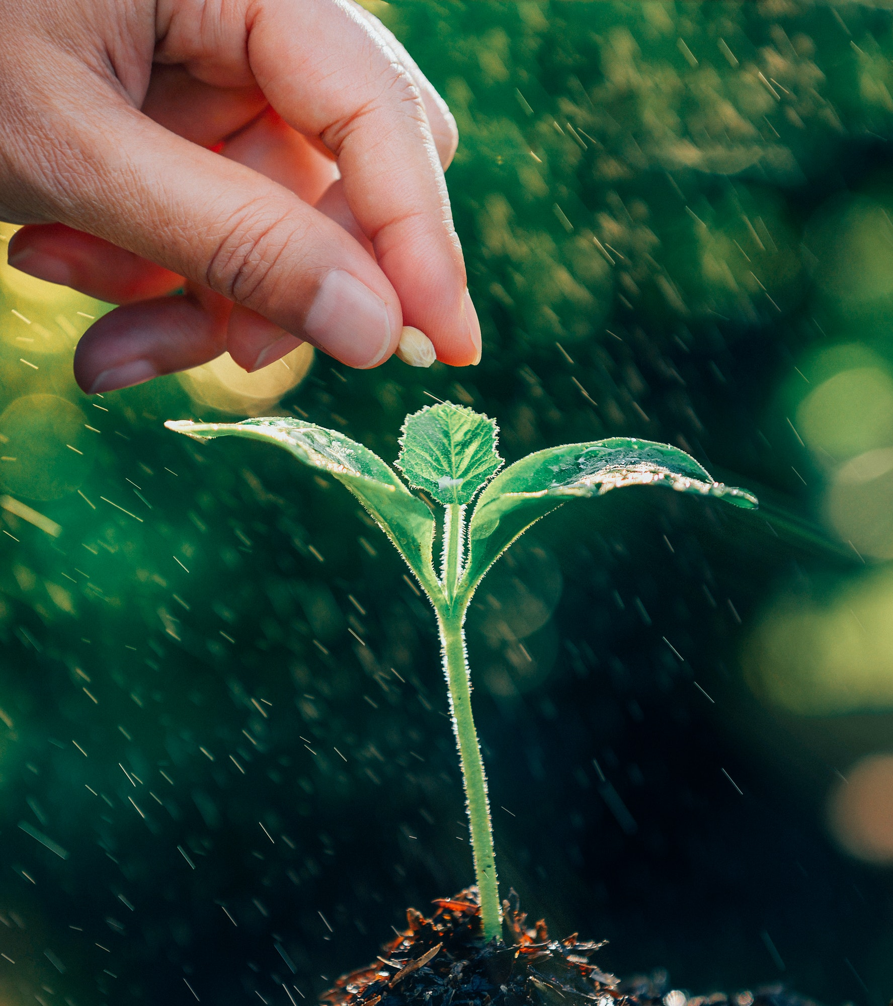 hand planting a seed in soil