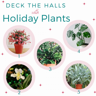 Top Holiday Plants