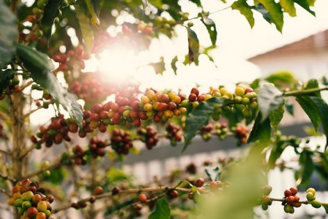 agriculture-berries-blur
