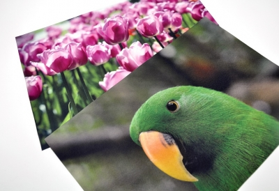 flower and bird pictures